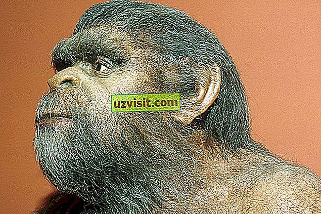 Homo erectus - tiede