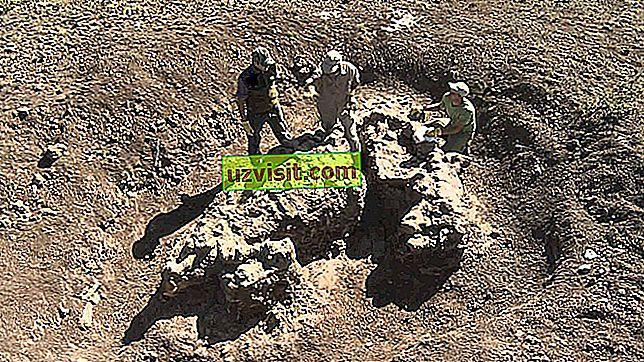 палеонтологията