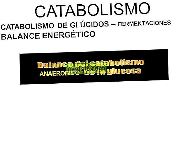 scienza: catabolismo