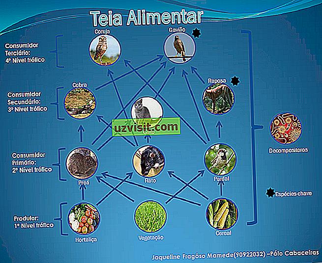 Хранителна мрежа
