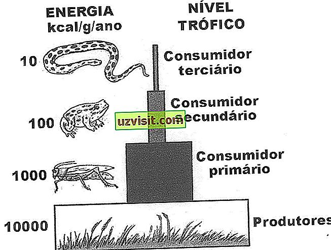 Significato della catena alimentare
