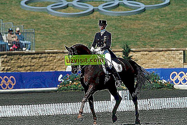 Ngựa concours - Biểu thức Latin