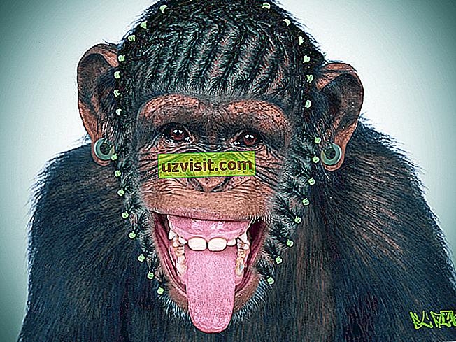 Hrebeň opicu