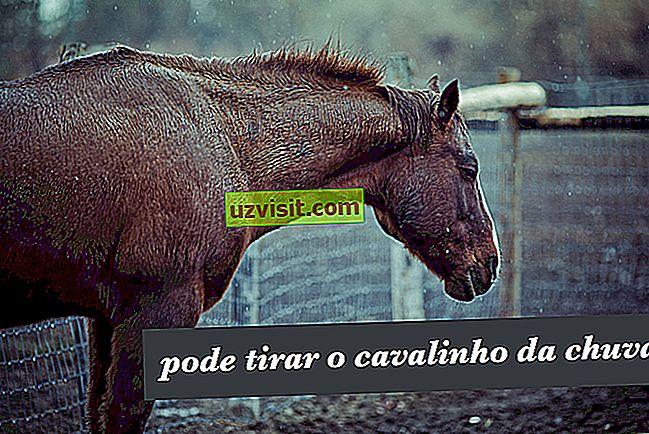 Vyjměte koně z deště