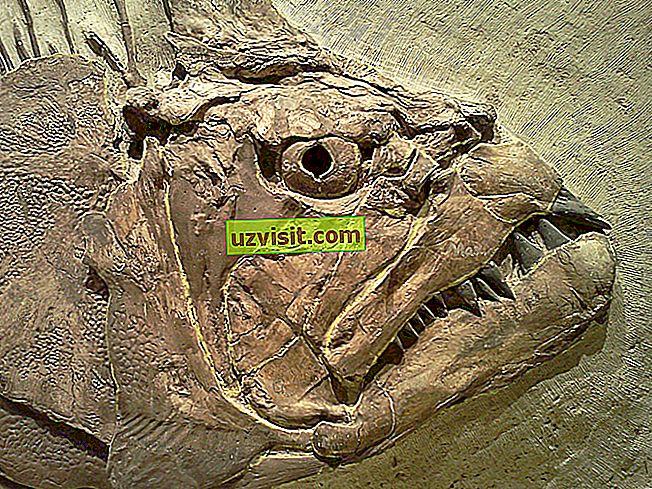 общ - вкаменелост