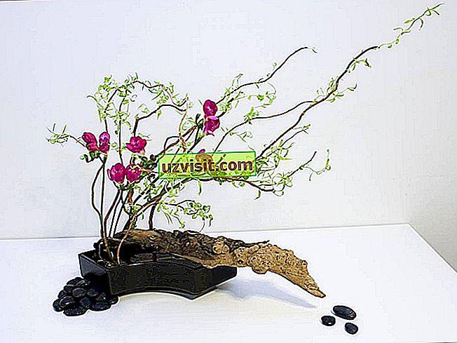 bendra - Ikebana
