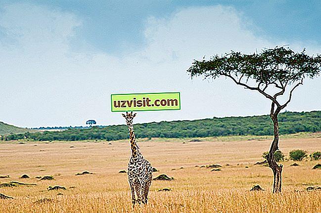savanni
