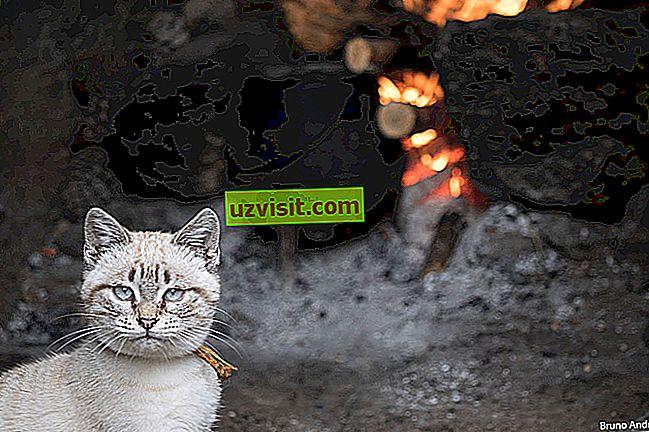 Oljuštena mačka se boji hladne vode