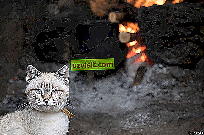 splošno - Prepečena mačka se boji hladne vode