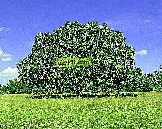 Rodoslovno drevo