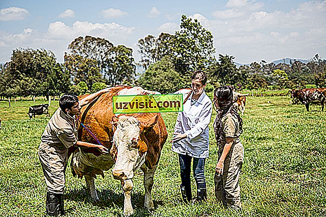 bendra - Gyvulininkystė