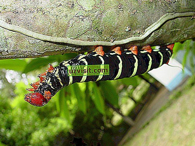 üldiselt - Caterpillar