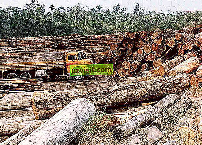 odlesňovania