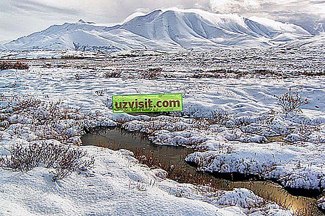 genel - tundra