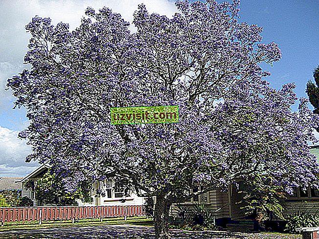 палисандрово дърво