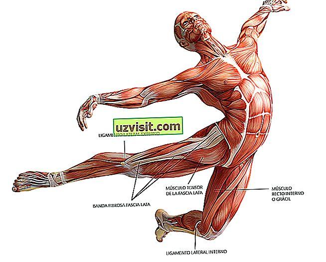 Anatoomia