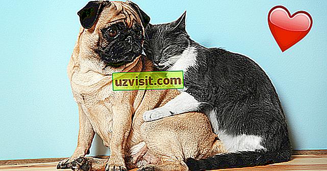 7 obrázků, které dokazují, že zvířata také vědí, co je láska