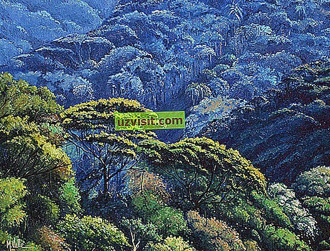 splošno - Atlantski gozd