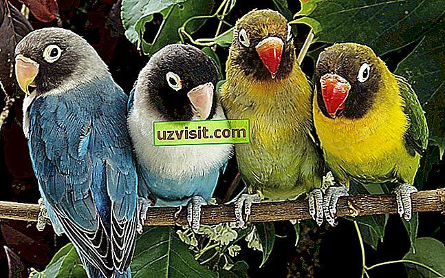üldiselt: Linnud