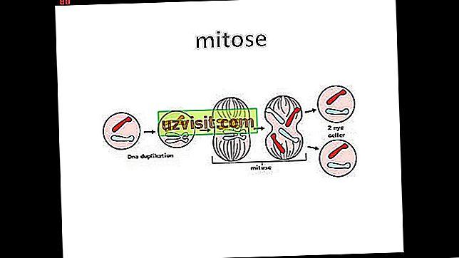 splošno - Mitoza
