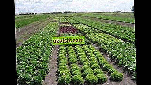 Význam agronomie