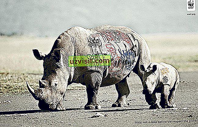 общ - WWF