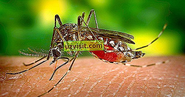 Dengue drudzis