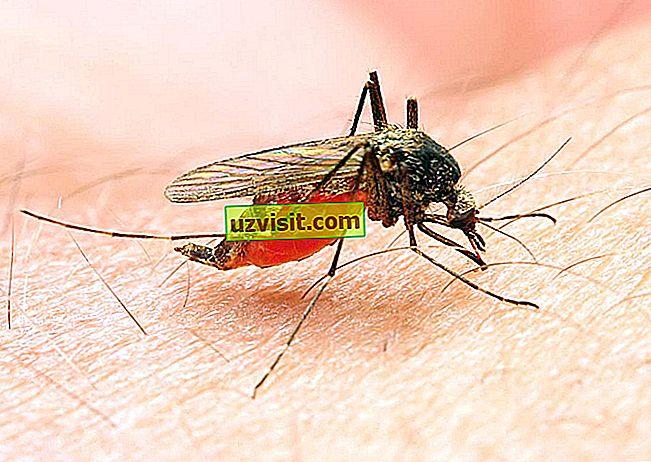 médecine: Paludisme