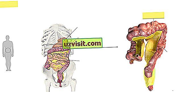 المساريقا الأغشية التي تغلف الأمعاء